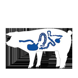Pig-Zonder-tekst small 2