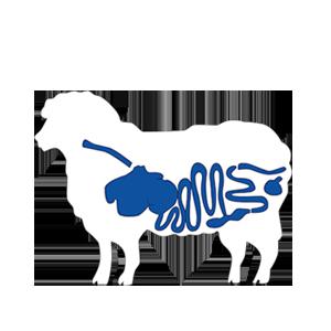 Sheep-Zonder-tekst-2